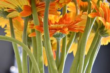 Free Selective Focus Photography Of Orange Petaled Flowers Royalty Free Stock Photo - 114378505