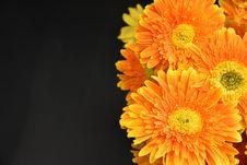 Free Macro Photography Of Orange Flowers Royalty Free Stock Images - 114378519
