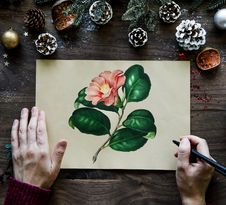 Free Man Drawing Pink Camellia Flower Beside Brown Pinecones Royalty Free Stock Photo - 114378545