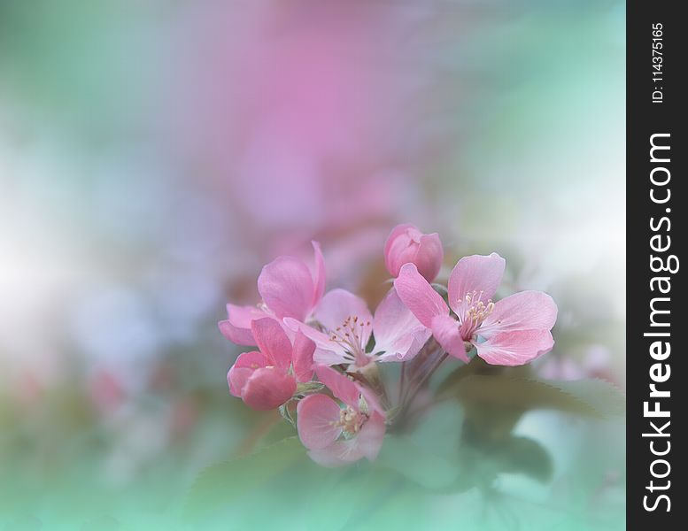 Spring nature blossom web banner or header.Abstract macro photo.Artistic Background.Fantasy design.Colorful Wallpaper.