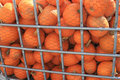 Free Pumpkins Stock Image - 11441271