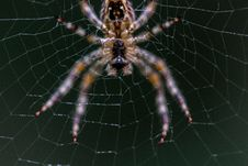 Free Close-up Selective Focus Photography Of Barn Spider On Web Stock Images - 114442864