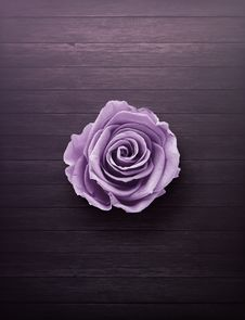 Free Purple Rose On Wooden Surface Stock Photography - 114443192