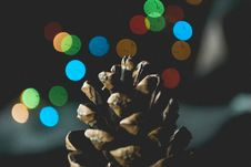 Free Selective Focus Photography Of Pine Cone Royalty Free Stock Photography - 114443287