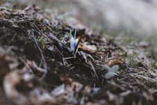 Free Selective Focus Photo Of Green Grass Royalty Free Stock Photography - 114510547