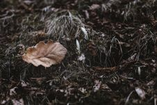 Free Close-Up Photography Of Dry Leaves Royalty Free Stock Photos - 114510548
