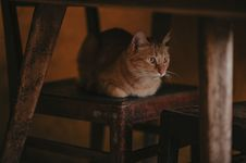 Free Close-Up Photography Of A Cat Lying On Brown Wooden Chain Stock Images - 114510594
