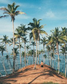 Free Person Standing On Dirt Surrounded By Coconut Trees Stock Photography - 114510652