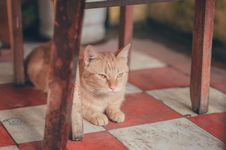 Free Photography Of Orange Tabby Cat Lying On Floor Royalty Free Stock Photo - 114510685