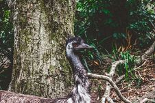 Free Gray Short-beaked Animal On Forest Royalty Free Stock Photography - 114510727