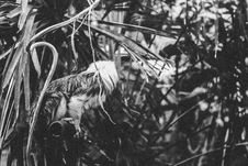 Free Grayscale Photography Of Animal Perching On Metal Near Plants Royalty Free Stock Photos - 114510738
