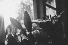 Free Grayscale Photography Of Flowers Stock Photos - 114510813