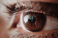 Free Brown Human Eye Stock Images - 114510834