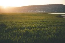 Free Green Grass Field During Sun Rise Royalty Free Stock Photography - 114510947
