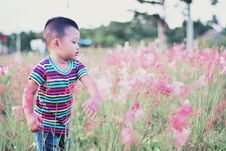 Free Boy Standing Surrounded By Bed Of Red Petal Flower Stock Images - 114510974