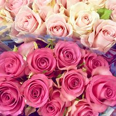 Free Pink And White Rose Boquets Stock Image - 114510991