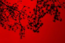 Free Silhouette Of Tree Branches Royalty Free Stock Photos - 114603058