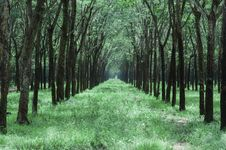 Free Grass Pathway In The Middle Of Trees Royalty Free Stock Images - 114603089