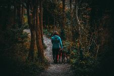 Free Woman Beside Dog Walking In The Forest Under Tall Trees At Daytime Royalty Free Stock Image - 114603116