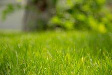Free Focus Photography Of Green Bermuda Grass Royalty Free Stock Photos - 114603138