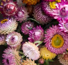 Free Purple And White Multi-petaled Flower Lot Closeup Photography Stock Photo - 114603190