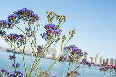 Free Selective Focus Photo Of Purple Petaled Flowers Stock Photos - 114603263