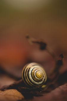 Free Close Up Photo Of White Snail Royalty Free Stock Photos - 114603318