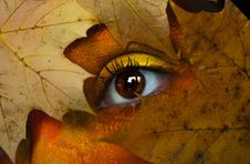 Free Brown Maple Leaf With Person S Eye Stock Photos - 114603393
