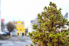 Free Selective Focus Photography Of Green Fern Tree Stock Photo - 114603440