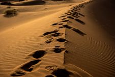 Free Sand Dune With Foot Prints Royalty Free Stock Photography - 114603467