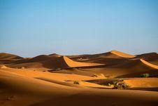 Free Green Bushes On Desert Stock Image - 114603501