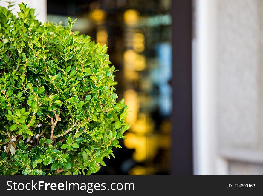 Selective Focus Photography of Ixora Plant