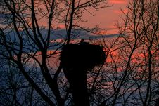 Nest Of Stork On Sunset Background Royalty Free Stock Photos