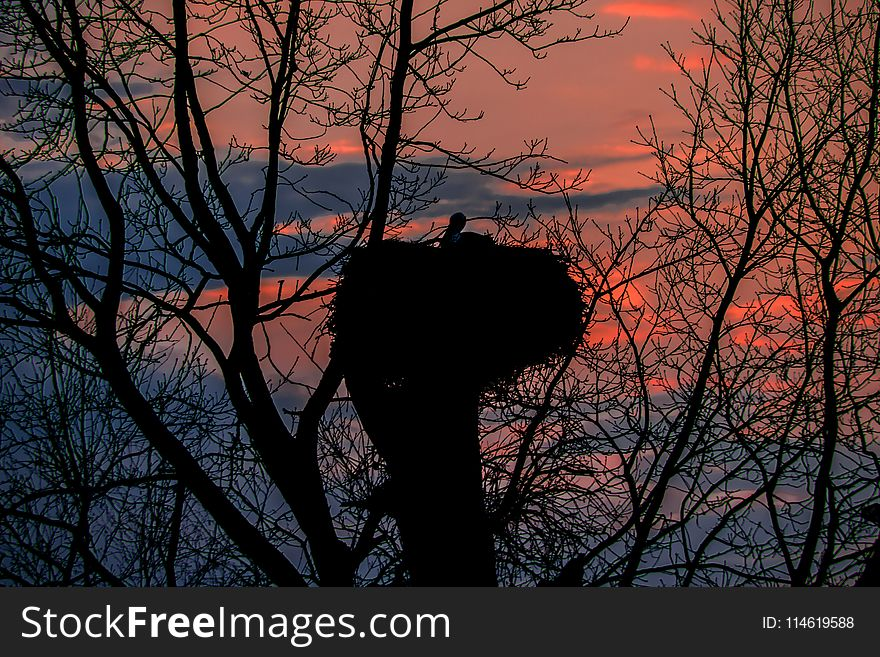Nest of stork on sunset background