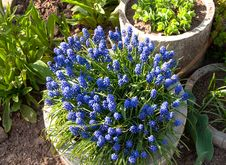 Free Blue Flowers In The Round Flowerbed Royalty Free Stock Photo - 114628235