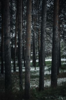 Free Photography Of Tree Trunks During Winter Stock Photos - 114677493