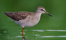 Free Close-Up Photography Of Willet Bird On Water Stock Photography - 114677512