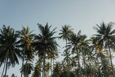 Free Coconut Trees Under Blue Sky At Daytime Stock Image - 114677571
