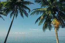 Free Two Coconut Trees Near Sea Royalty Free Stock Images - 114677589