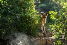 Free Dog At A Stairs Royalty Free Stock Image - 114677626