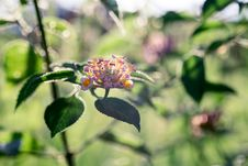 Free Clustered Flowers Stock Photo - 114677710