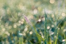Free Macro Photography Of Blades Of Grass Royalty Free Stock Photo - 114677715