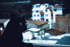Free Black Cat Beside Window Stock Photo - 114677720