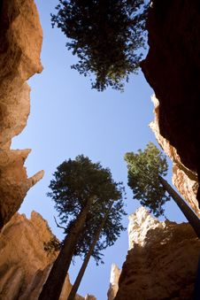 Free Worm S Eye View Photography Of Trees And Rock Formation Royalty Free Stock Images - 114677789