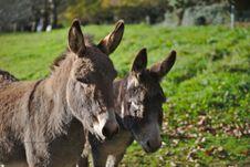 Free Two Brown Donkeys Royalty Free Stock Photos - 114677828
