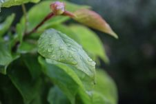 Free Shallow Focus Photography Of Leaf With Water Droplets Royalty Free Stock Photos - 114677858