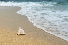 Free Sea, Shore, Beach, Ocean Royalty Free Stock Images - 114712289