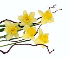 Free Flower, Flowering Plant, Yellow, Plant Stock Image - 114712661
