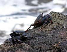 Free Amphibian, Decapoda, Animal Source Foods, Crab Royalty Free Stock Photos - 114712718