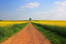 Free Field, Yellow, Canola, Rapeseed Royalty Free Stock Photo - 114712895